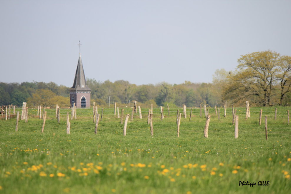 Birdwatching souslorme-argonne.fr gite rn Argonne