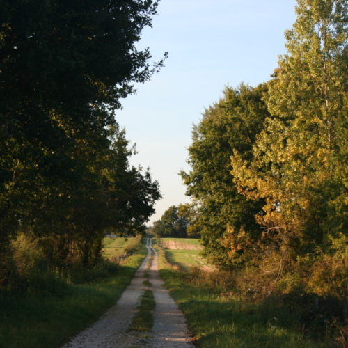 Chemin près de Gîte en Argonne