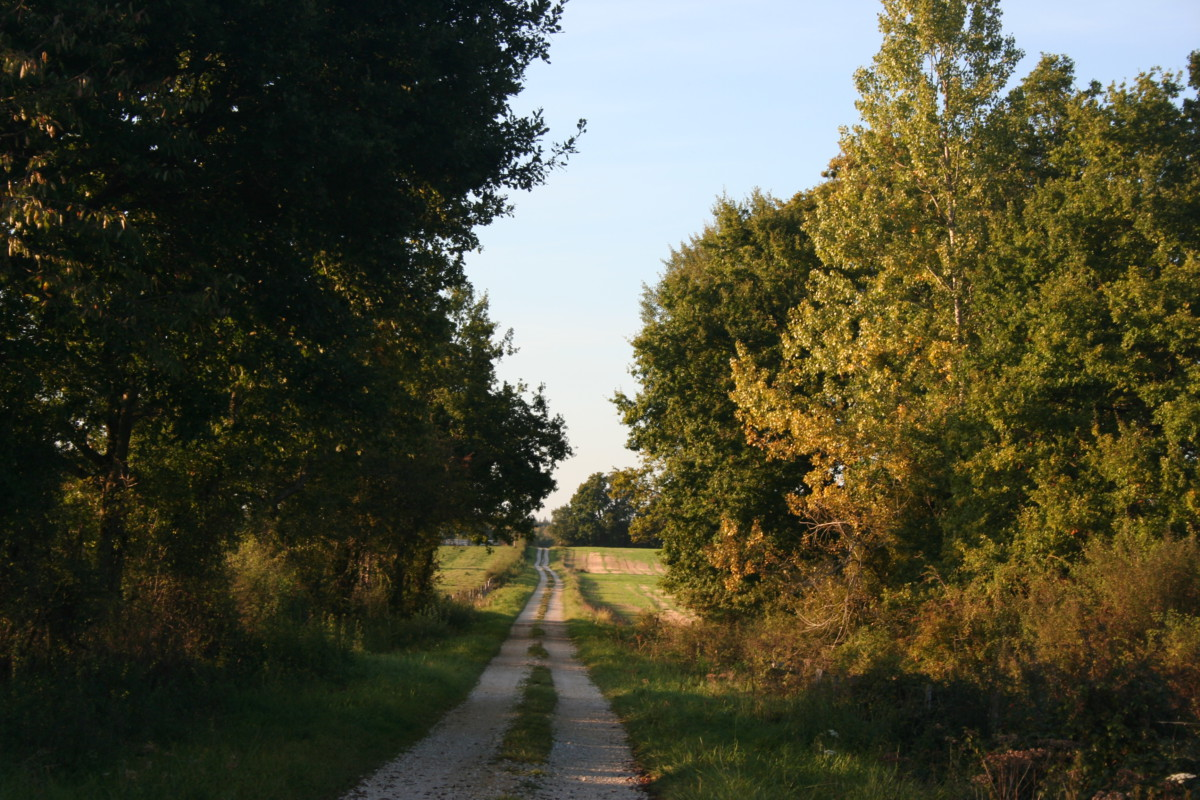 Promenade près du Gîte Sous l'Orme, ma maison en Argonne